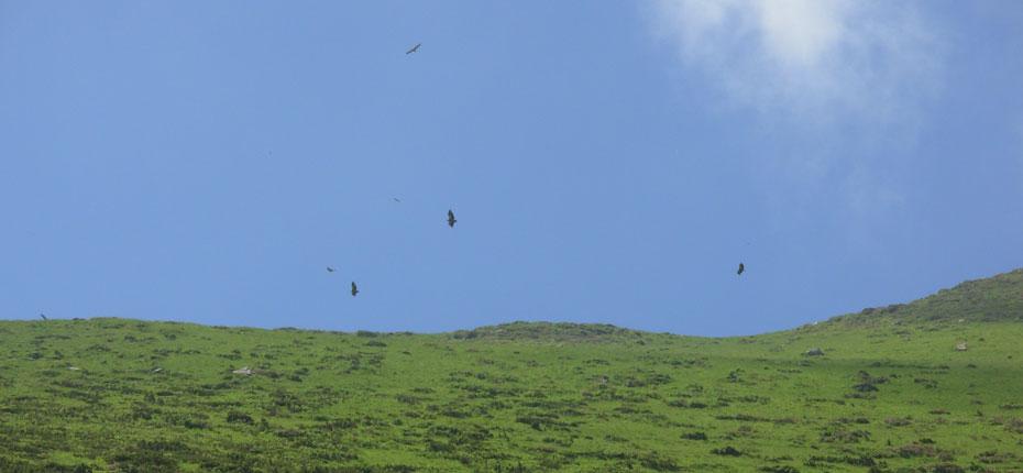 Vol d'aigles tout près du camping
